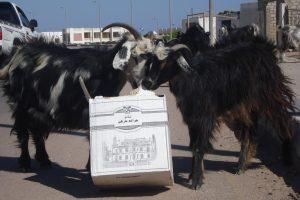 #CTCmideast2017 - goats in Dahab