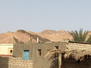 Friday Tea with Bedouin Women in Asalah, Egypt - Bedouin home against the Sinai Mountains