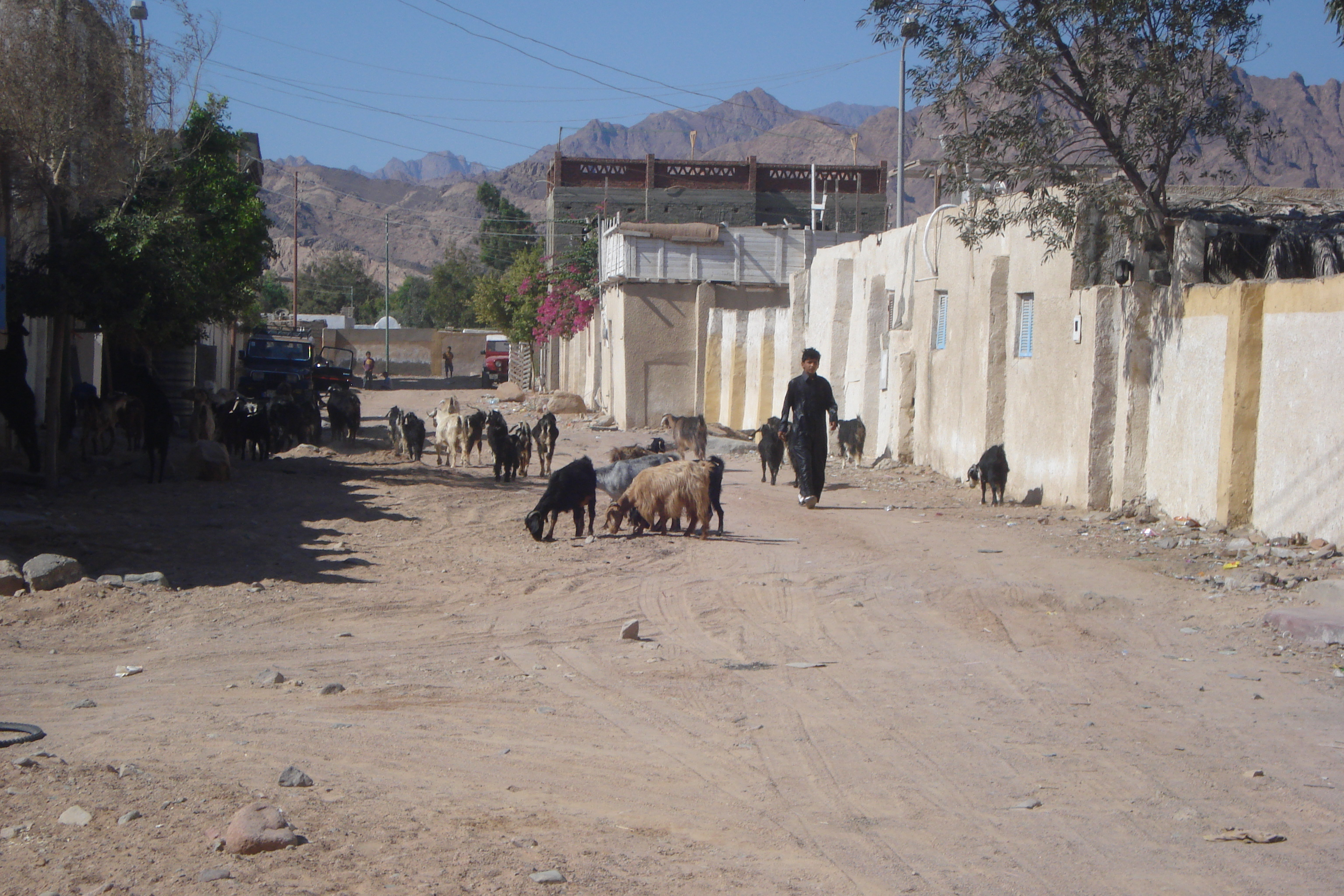 Village In Upper Egypt - A Street Made Of Dirt In Egypt, With Goats And A Boy Walking Wearing A Black Jalabeya