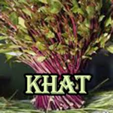 Khat - a green plant with purple stems